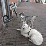 workshop steppen met je hond